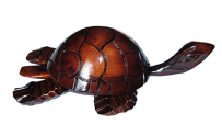 Черепаха 35