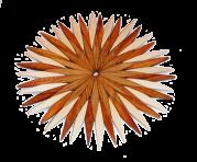 Drewniane Trivet 20 cm